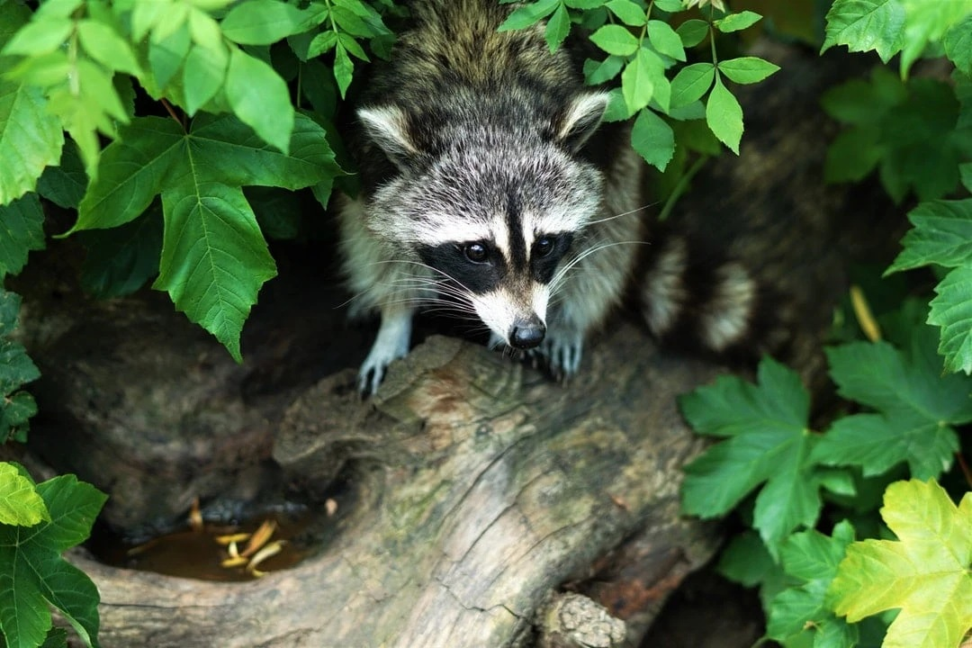 Benefits Of Hiring A Wildlife Removal Service