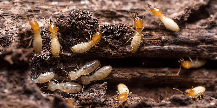 The Truth About Termite Prevention and Treatment