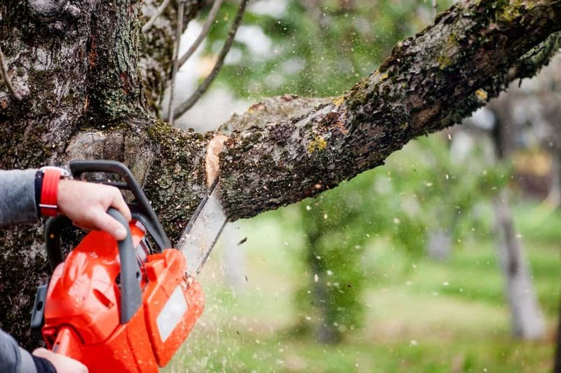 A Guide to Cutting Trees – Tree Trimming Basics